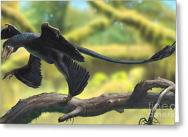 A Microraptor Perched On A Tree Branch Greeting Card by Sergey Krasovskiy