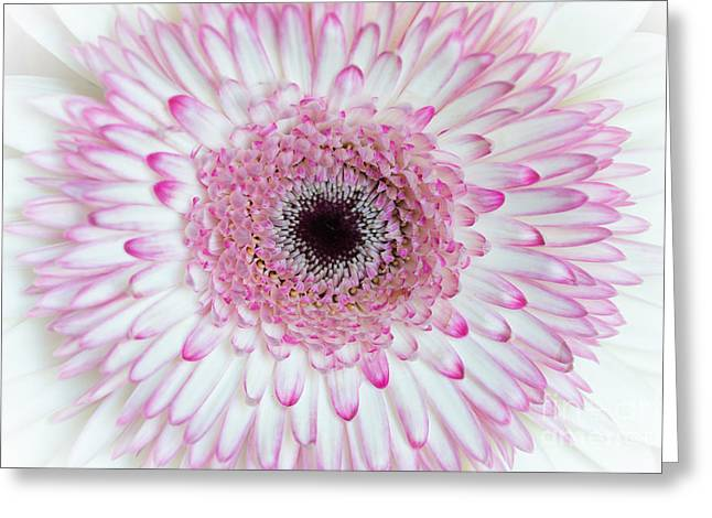 A Million Petals Greeting Card