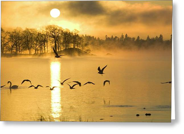 A Misty Dawn On Lake Windermere Greeting Card by Ashley Cooper