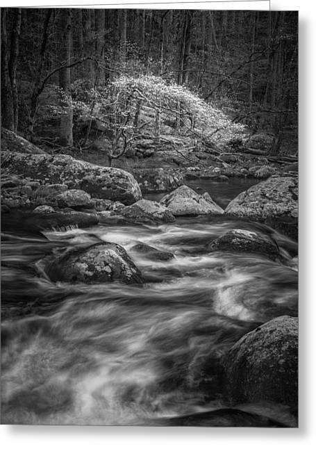 A Monochrome Muse Greeting Card by Mike Lang