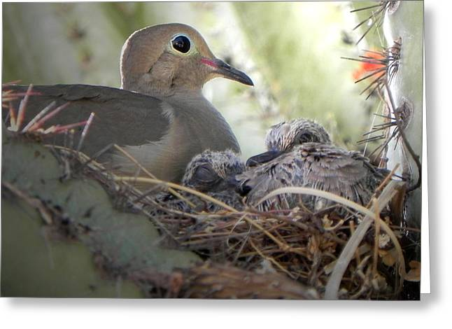 Greeting Card featuring the photograph A Mothers' Love by Deb Halloran