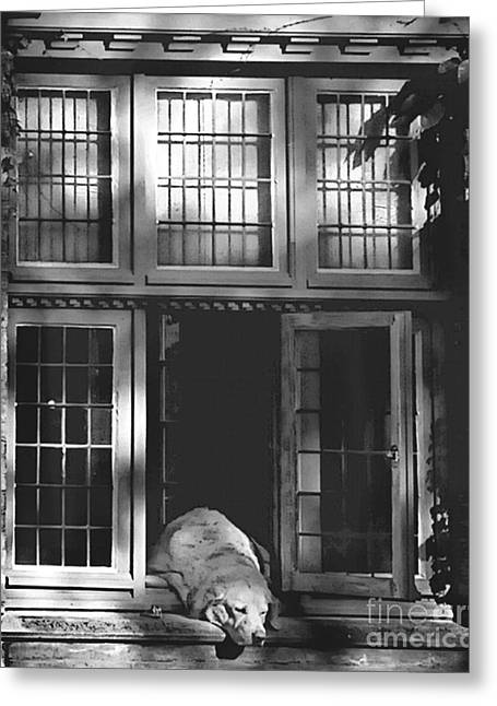 A Nap In The Sun Bw Greeting Card by Louise Fahy
