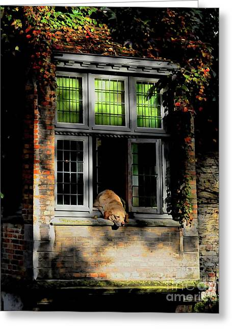 A Nap In The Sun Greeting Card by Louise Fahy