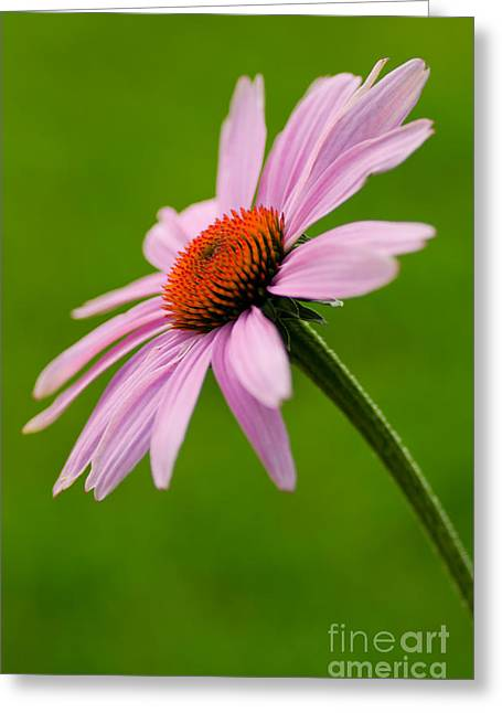A Natural Beauty Greeting Card by Nick  Boren