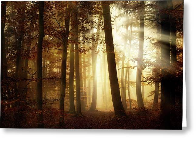 A New Day Greeting Card by Norbert Maier