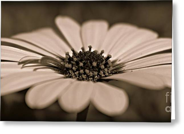 A New Life Greeting Card by Clare Bevan