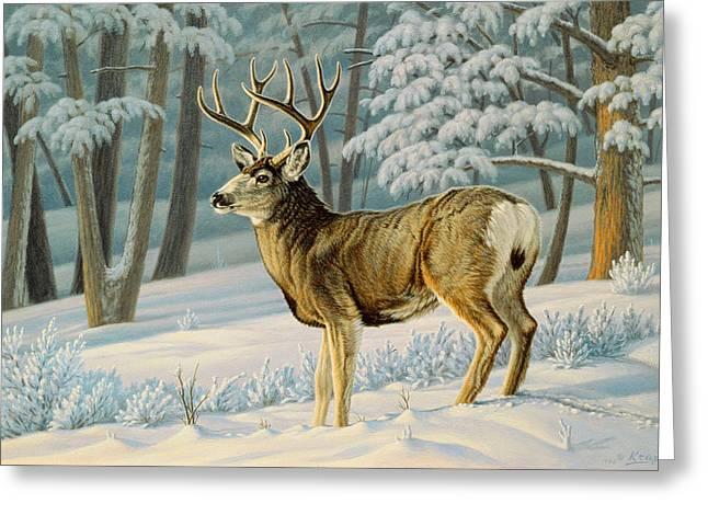 A Nice Buck Greeting Card by Paul Krapf