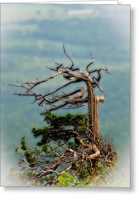 A Once Magnificent Tree Greeting Card by Jim Finch