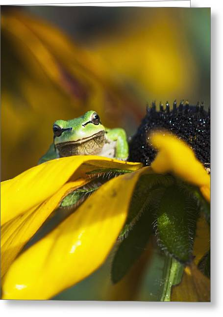 A Pacific Treefrog Looks For Flies Greeting Card by Robert L. Potts