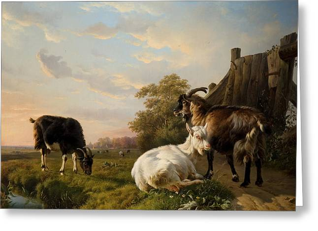 A Pack Of Goats Greeting Card by Jacques Raymond Brascassat