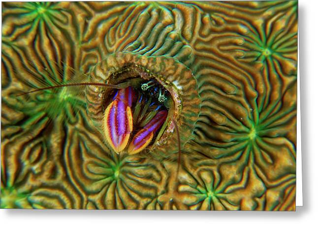 A Pagurid Hermit Crab Lives In Coral Greeting Card