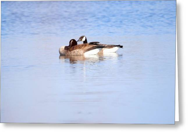 A Pair Of Geese Greeting Card by Valarie Davis
