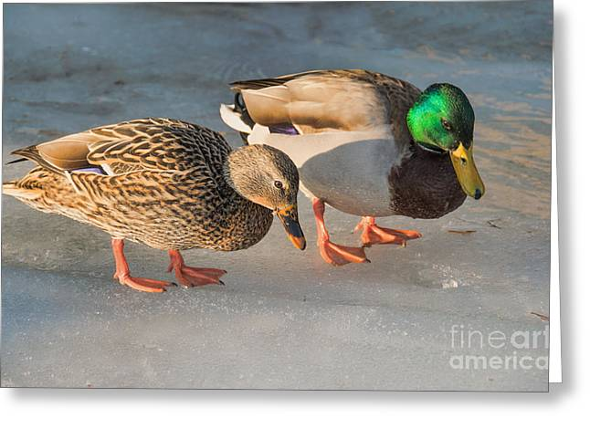 A Pair Of Mallards On Frozen Lake Greeting Card by Gerda Grice