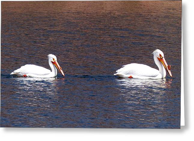 A Pair Of Pelicans Greeting Card