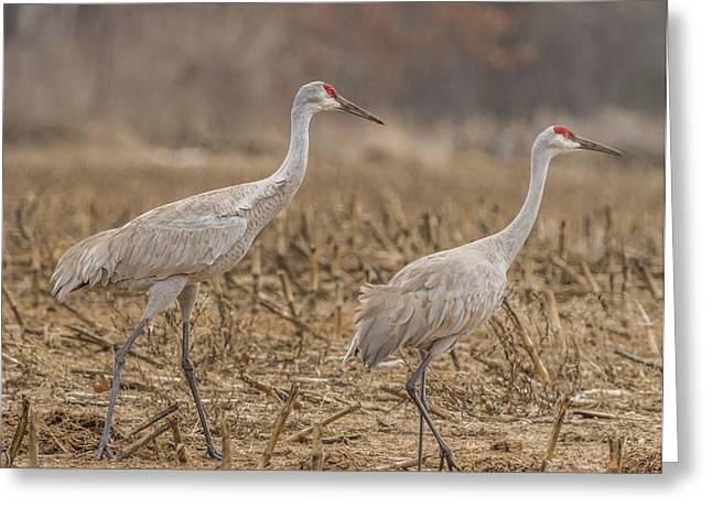 A Pair Of Sandhill Cranes 2014-1 Greeting Card