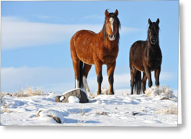 Greeting Card featuring the photograph A Pair Of Wild Mustangs In Snow by Vinnie Oakes
