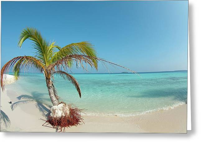 A Palm Tree Being Slowly Washed Away Greeting Card by Scubazoo