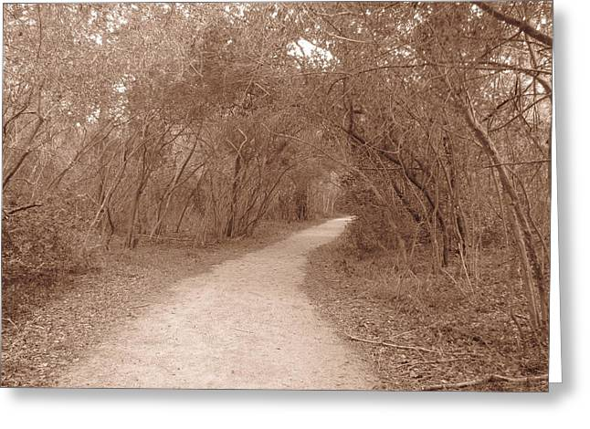 Greeting Card featuring the photograph A Path In Life by Beth Vincent