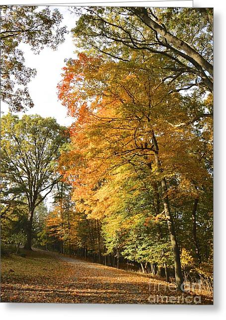 A Peacefall Path Greeting Card by Jay Nodianos