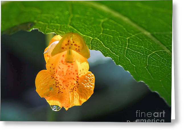 A Petite Orange Orchid Greeting Card by David Perry Lawrence