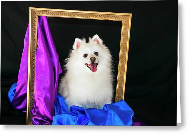 A Picture Of An American Eskimo Dog Greeting Card by Zandria Muench Beraldo