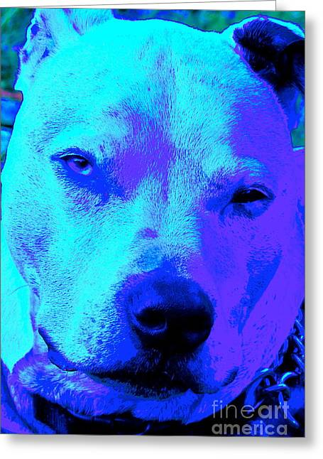 A Pit Bull's Love Is Forever// End Dog Fighting Greeting Card by Q's House of Art ArtandFinePhotography