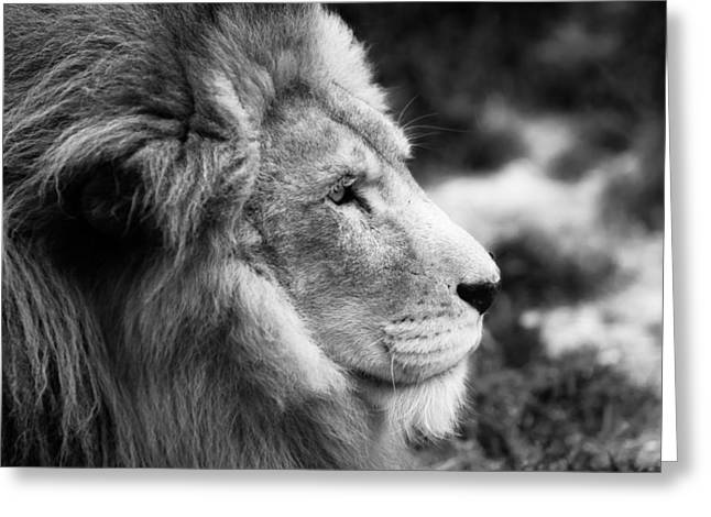 A Portrait Of An African Lion Greeting Card