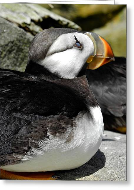 A Pretty Puffin Greeting Card by Kirsten Giving