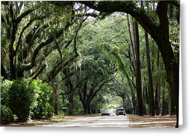 A Pretty Tree Covered Road Somewhere On Hilton Head Island Greeting Card