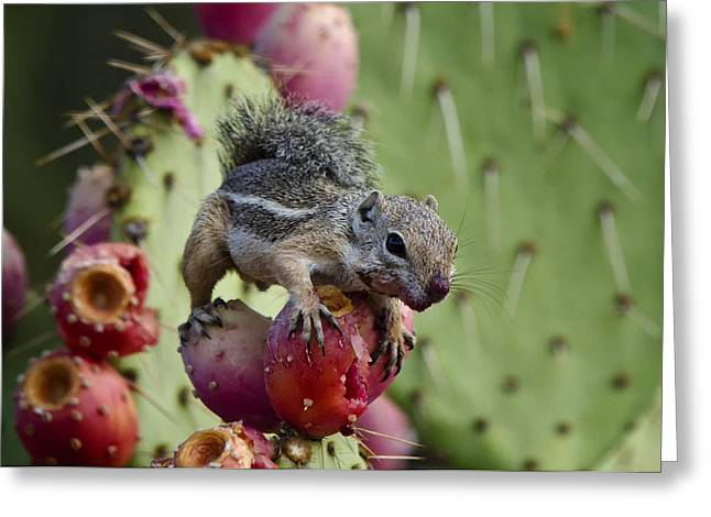 A Prickly But Tasty Treat  Greeting Card by Saija  Lehtonen