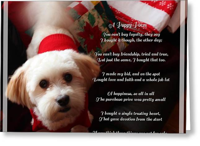 A Puppy Poem And A Puppy Dressed For Christmas Greeting Card by Barbara Griffin