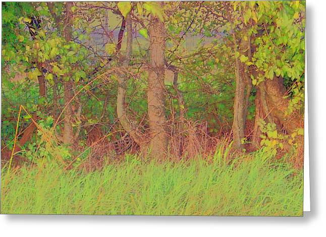 A Quiet Place Greeting Card by Shirley Moravec