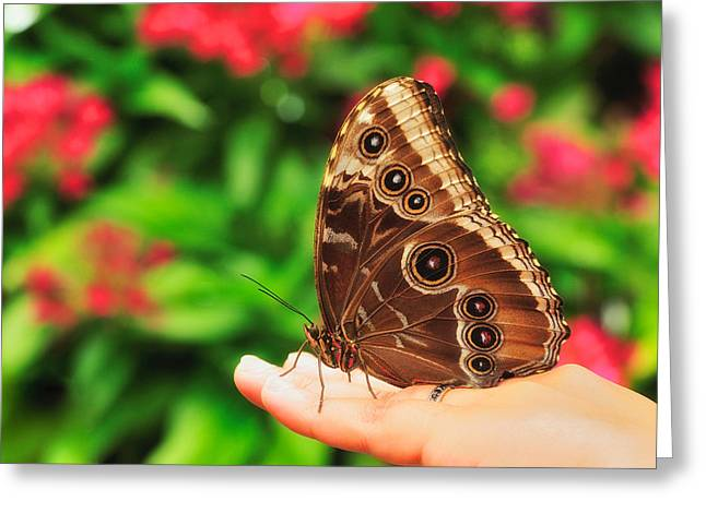 A Random Walk In The Butterfly Garden Greeting Card