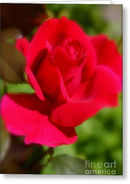 A Red Rose Greeting Card by Jay Nodianos
