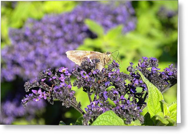 Greeting Card featuring the photograph A Resting Traveler by Teresa Schomig