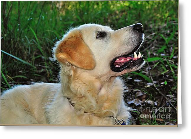 A Retriever's Loving Glance Greeting Card by Kaye Menner
