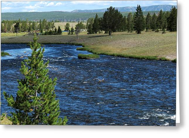 Greeting Card featuring the photograph A River Runs Through Yellowstone by Laurel Powell