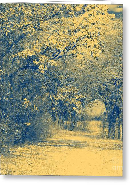 A Road Framed With Trees Greeting Card by Mickey Harkins