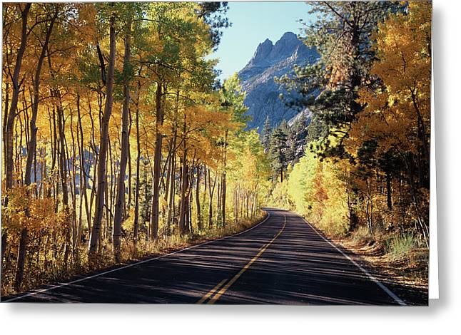 A Road Through The Autumn Colors Greeting Card by Christopher Talbot Frank