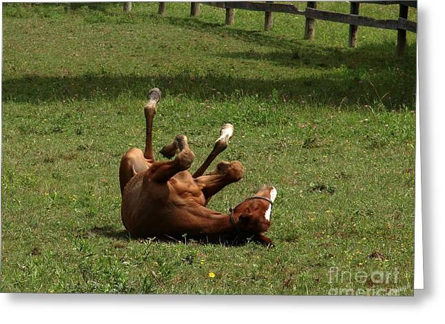 A Roll In The Hay Is For Horses Greeting Card
