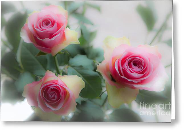 A Rose And A Rose And A Rose Greeting Card
