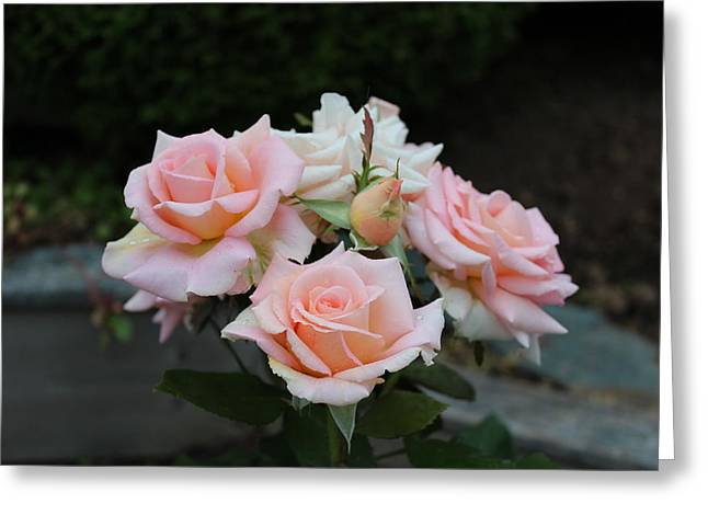 A Rose Bouquet Greeting Card by Patricia Hiltz