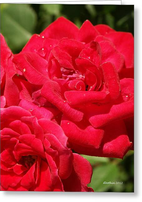 Greeting Card featuring the photograph A Rose By Any Other Name by Dick Botkin