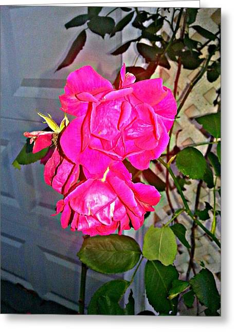 A Rose From The Garden Of Love Greeting Card