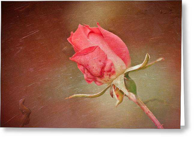 A Rose In The Rain Greeting Card