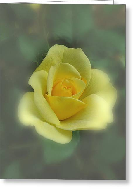 Greeting Card featuring the photograph A Rose Is A Rose by David Armstrong