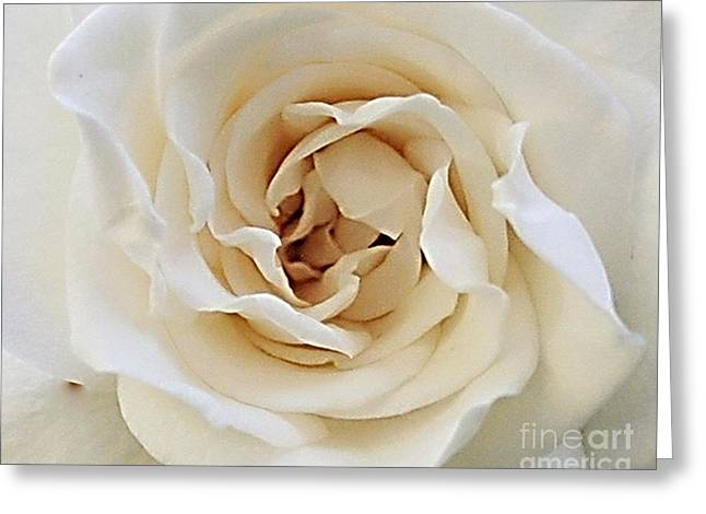 Greeting Card featuring the photograph A Rose Is A Rose by Rosemary Aubut
