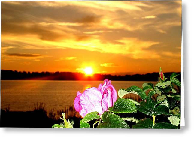 A Rosy Sunset In Maine Greeting Card