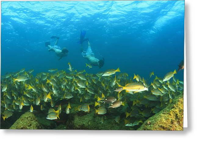 A School Of Fish Underwater And Two Greeting Card