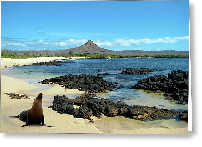 A Sea Lion (eumetopias Jubatus Greeting Card